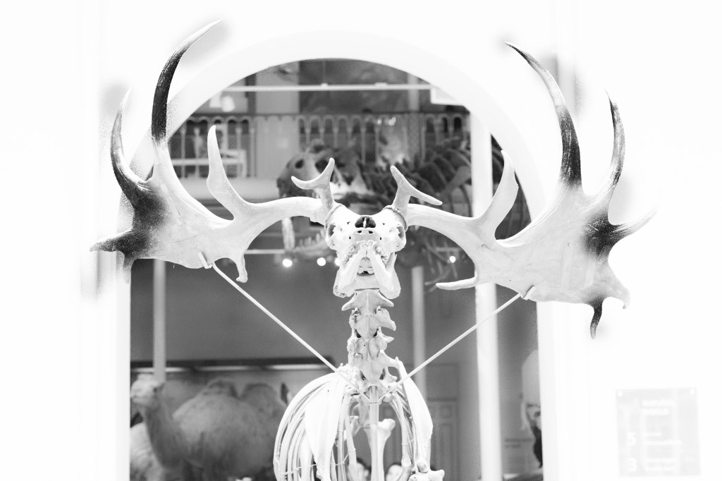 stag (1 of 1)