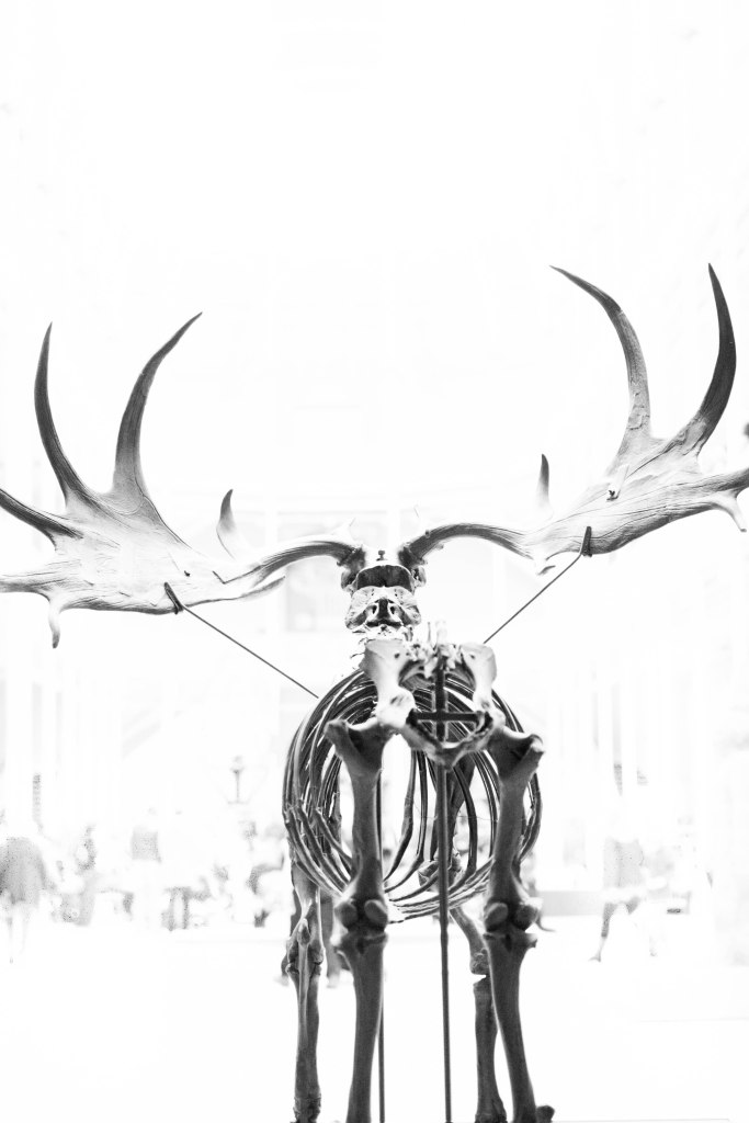 stag4 (1 of 1)